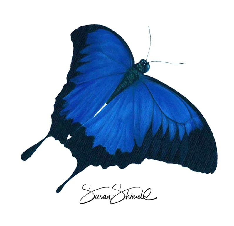 "<span class=""show_in_gallery"">Blue Mountain Butterfly</span><span class=""show_in_popup""><a href=""https://www.natureinart.com/shop/fine-art/blue-mountain-butterfly/"" class=""pop-color1"">More info...</a></span>"