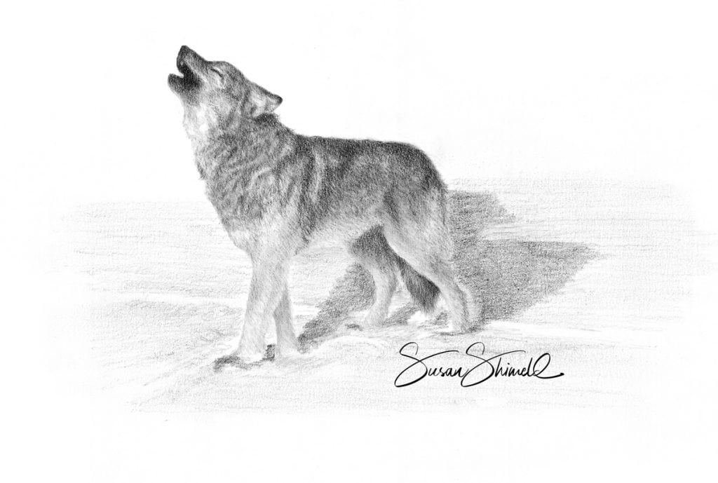 "<span class=""show_in_gallery"">Howling Wolf</span><span class=""show_in_popup""><a href=""https://www.natureinart.com/shop/fine-art/howling-wolf/"" class=""pop-color1"">More info...</a></span>"