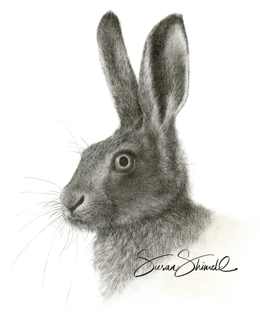 "<span class=""show_in_gallery"">Brown Hare Portrait</span><span class=""show_in_popup""><a href=""https://www.natureinart.com/shop/original/brown-hare-portrait-2/"" class=""pop-color1"">More info...</a></span>"
