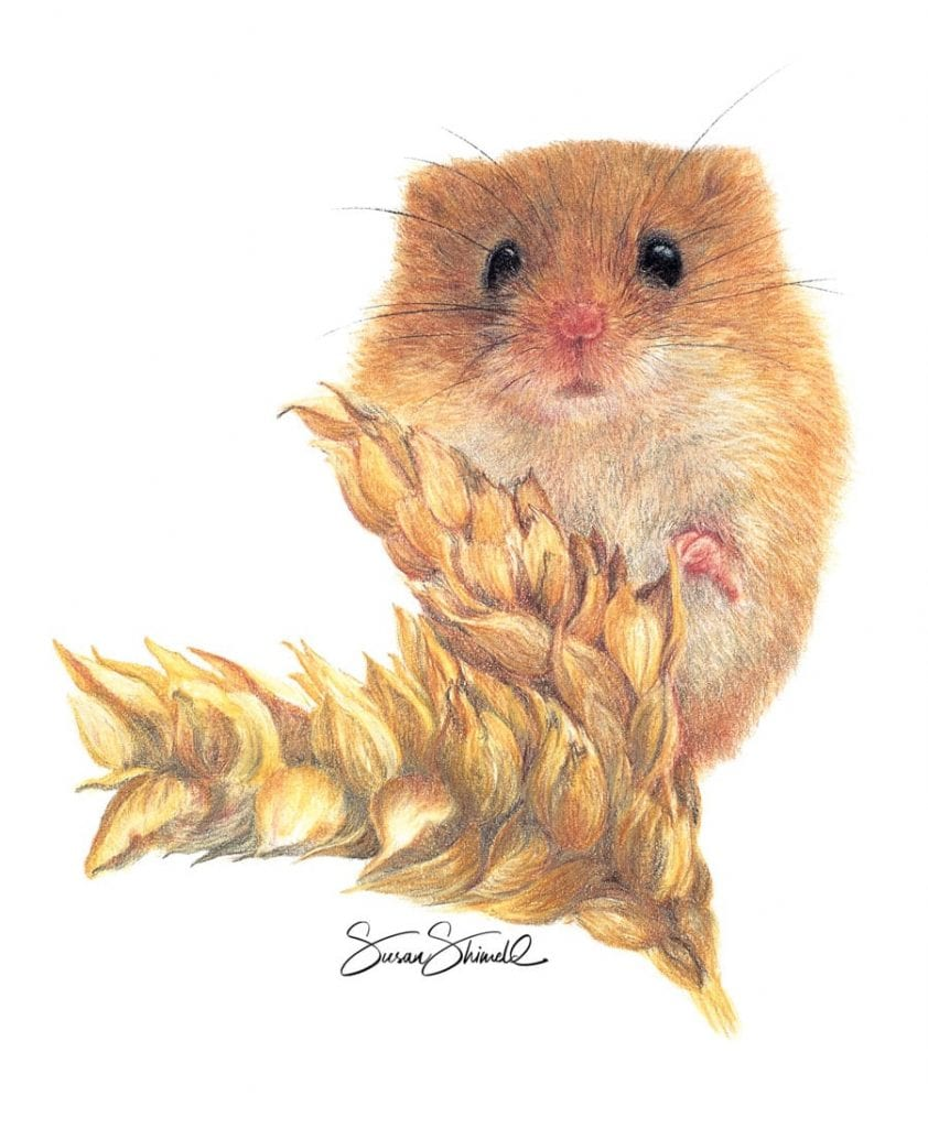 "<span class=""show_in_gallery"">Harvest Mouse</span><span class=""show_in_popup""><a href=""https://www.natureinart.com/shop/original/harvest-mouse-original-art/"" class=""pop-color1"">More info...</a></span>"