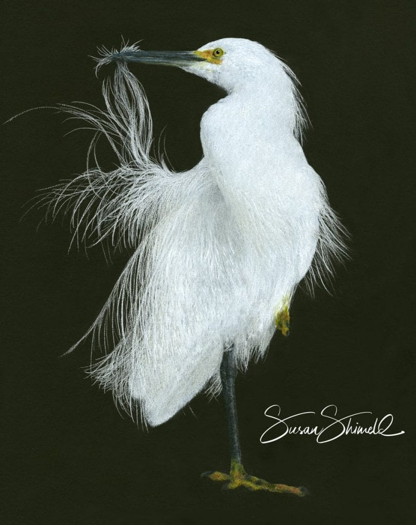 "<span class=""show_in_gallery"">Snowy Egret</span><span class=""show_in_popup""><a href=""https://www.natureinart.com/shop/original/snowy-egret-2/"" class=""pop-color1"">More info...</a></span>"