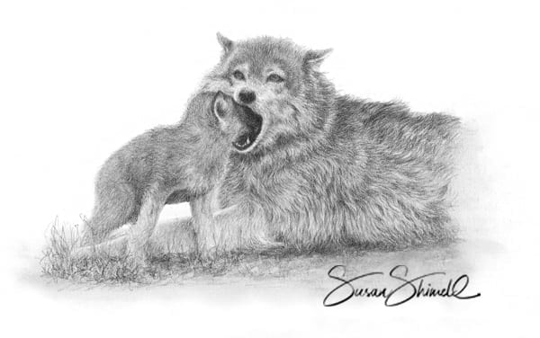"<span class=""show_in_gallery"">Feeding Cub</span><span class=""show_in_popup""><a href=""https://www.natureinart.com/shop/original/feeding-cub-wolf-card/"" class=""pop-color1"">More info...</a></span>"