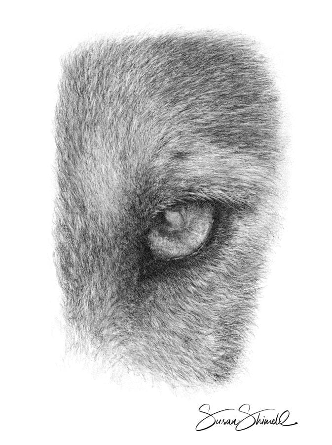 "<span class=""show_in_gallery"">Wolf Eye</span><span class=""show_in_popup""><a href=""https://www.natureinart.com/shop/original/wolf-eye-2/"" class=""pop-color1"">More info...</a></span>"