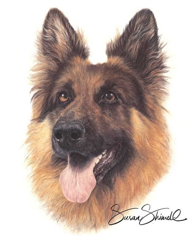 "<span class=""show_in_gallery"">German Shepherd</span><span class=""show_in_popup""><a href="" https://www.natureinart.com/shop/original/german-shepherd-original-art/"" class=""pop-color1"">More info...</a></span>"
