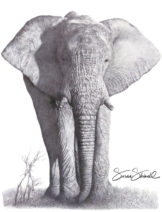 "<span class=""show_in_gallery"">Gentle Giant</span><span class=""show_in_popup""><a href="" https://www.natureinart.com/shop/original/gentle-giant-original-art/"" class=""pop-color1"">More info...</a></span>"