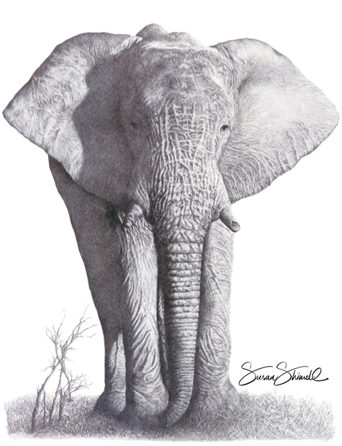 "<span class=""show_in_gallery"">Gentle Giant</span><span class=""show_in_popup""><a href=""https://www.natureinart.com/shop/fine-art/gentle-giant-african-elephant/"" class=""pop-color1"">More info...</a></span>"