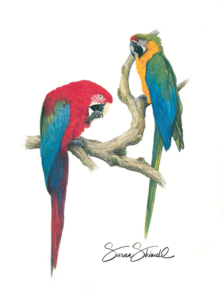"<span class=""show_in_gallery"">Macaw Magic</span><span class=""show_in_popup""><a href=""https://www.natureinart.com/shop/fine-art/macaw-magic/"" class=""pop-color1"">More info...</a></span>"