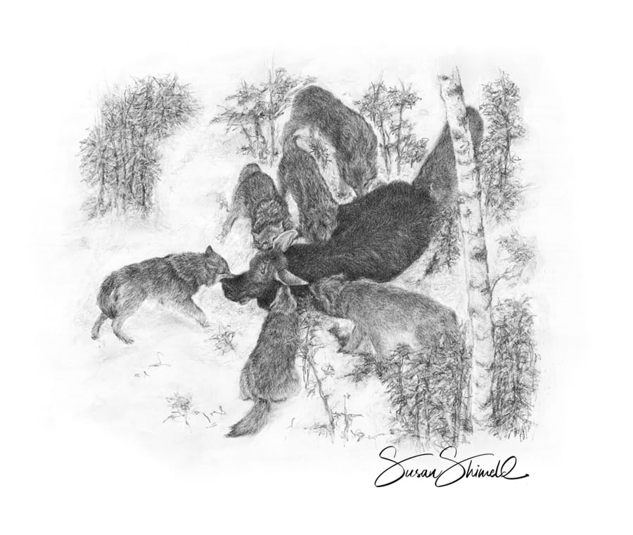 "<span class=""show_in_gallery"">Wolf Pack</span><span class=""show_in_popup""><a href=""https://www.natureinart.com/shop/original/wolf-hunting-pack-card/"" class=""pop-color1"">More info...</a></span>"