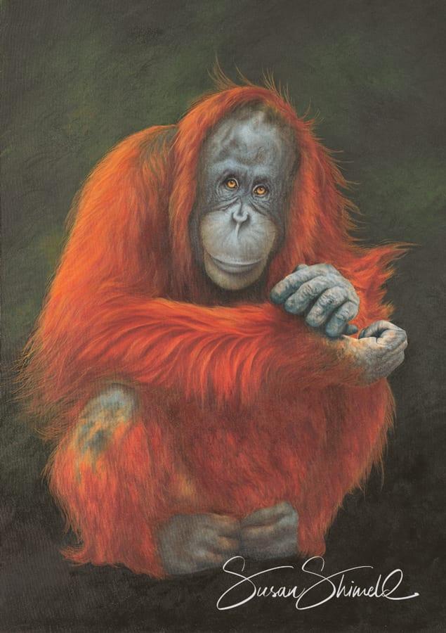 "<span class=""show_in_gallery"">Amy</span><span class=""show_in_popup""><a href=""https://www.natureinart.com/shop/fine-art/amy-orangutan/"" class=""pop-color1"">More info...</a></span>"