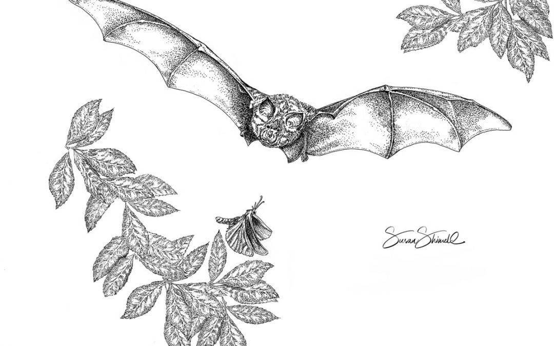 Corona & Bats