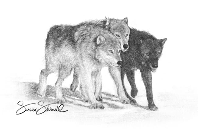 "<span class=""show_in_gallery"">On A Mission</span><span class=""show_in_popup""><a href=""https://www.natureinart.com/shop/fine-art/on-a-mission-wolves/"" class=""pop-color1"">More info...</a></span>"