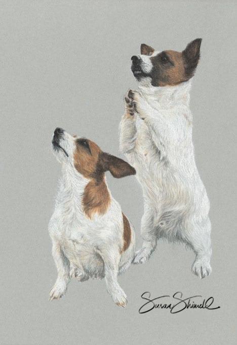Pastel portrait of Jack Russell Terriers.