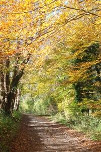 Autumn Memories Woodland track