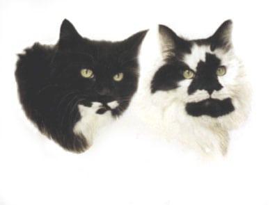 Bespoke pet portrait commission of two cats.