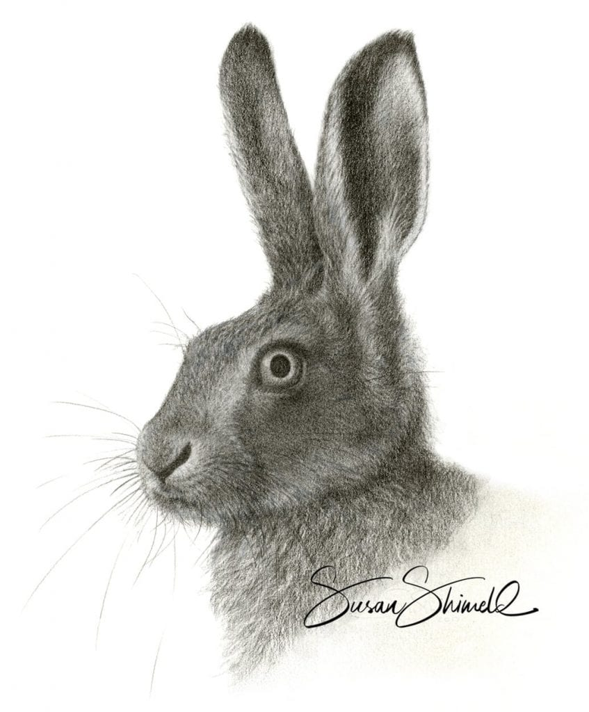 "<span class=""show_in_gallery"">Brown Hare Portrait</span><span class=""show_in_popup""><a href=""https://www.natureinart.com/shop/fine-art/brown-hare-portrait/"" class=""pop-color1"">More info...</a></span>"