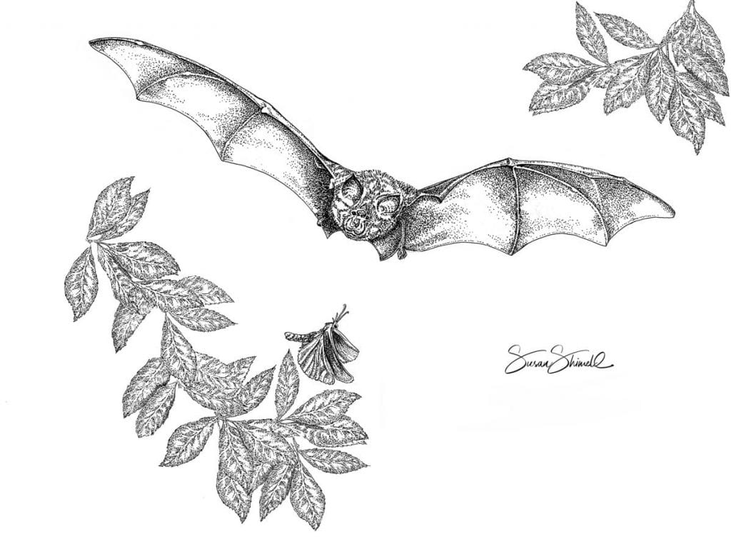 "<span class=""show_in_gallery"">Greater Horseshoe Bat</span><span class=""show_in_popup""><a href=""https://www.natureinart.com/shop/fine-art/greater-horseshoe-bat/"" class=""pop-color1"">More info...</a></span>"
