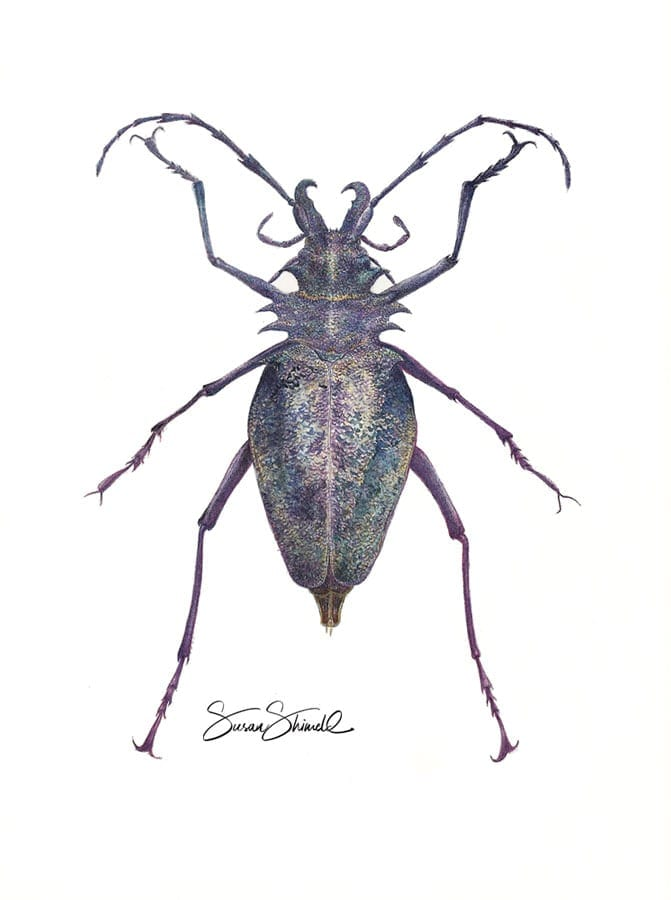 "<span class=""show_in_gallery"">Longhorn Beetle</span><span class=""show_in_popup""><a href=""https://www.natureinart.com/shop/original/longhorn-beetle-original-art/"" class=""pop-color1"">More info...</a></span>"