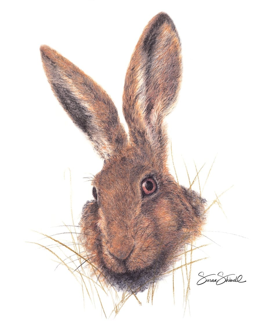Brown Hare Portrait. Pastel Painting