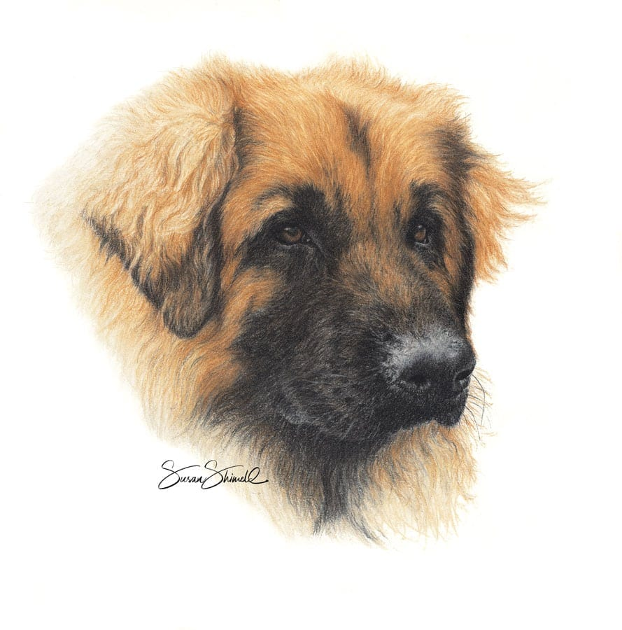 "<span class=""show_in_gallery"">Leonberger </span><span class=""show_in_popup""><a href=""https://www.natureinart.com/shop/original/leonberger-original/"" class=""pop-color1"">More info...</a></span>"