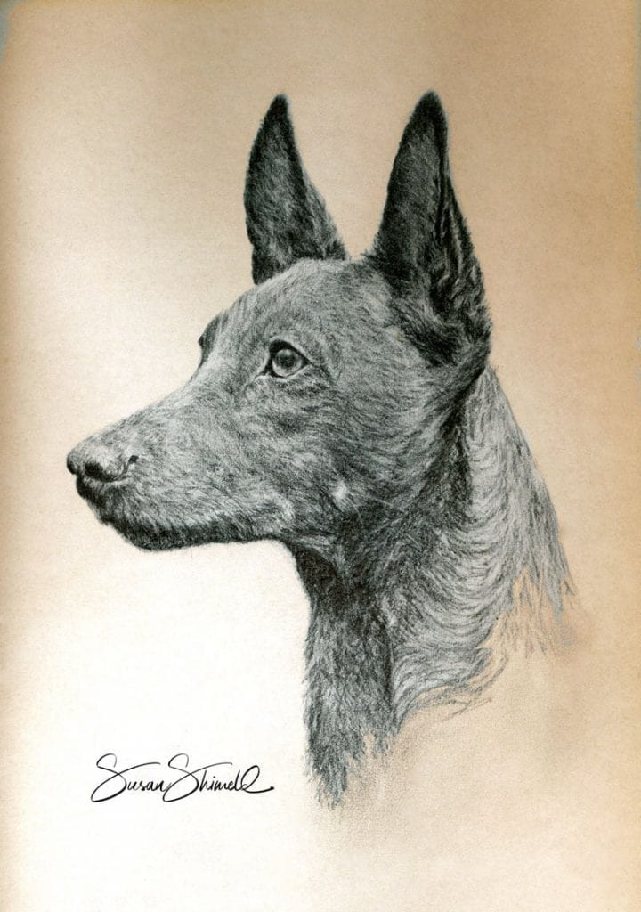 "<span class=""show_in_gallery"">Pharoah Hound</span><span class=""show_in_popup""><a href=""https://www.natureinart.com/shop/original/pharoah-hound/"" class=""pop-color1"">More info...</a></span>"