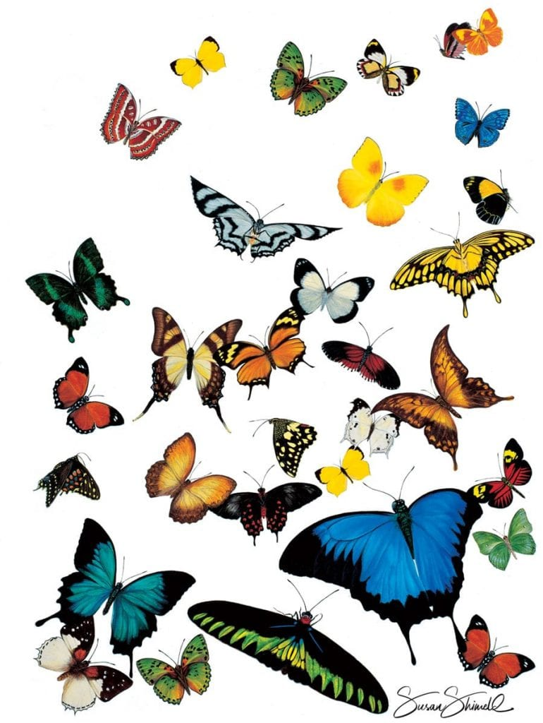 "<span class=""show_in_gallery"">Tropical Butterflies of the World</span><span class=""show_in_popup""><a href=""https://www.natureinart.com/shop/original/tropical-butterflies-of-the-world-original-art/"" class=""pop-color1"">More info...</a></span>"