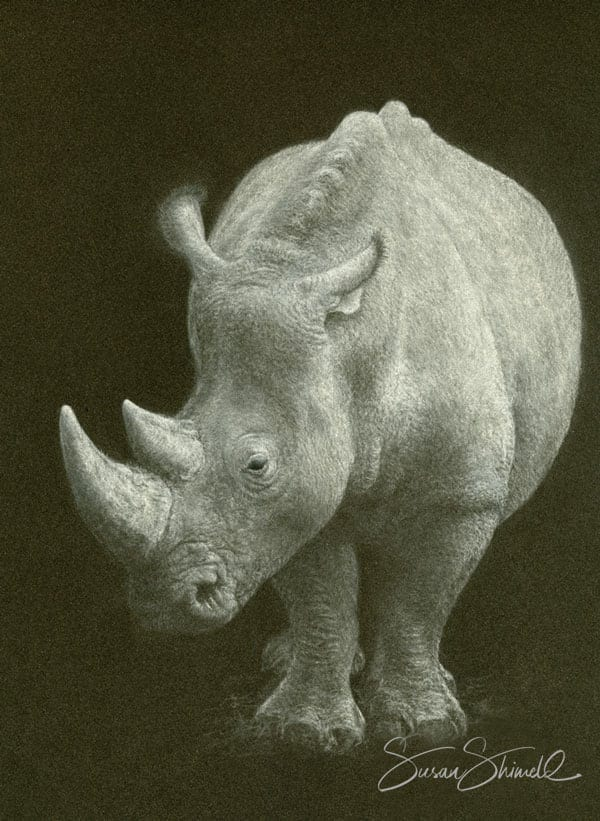 'Out of the Shadows' White Rhinocerus Pastel Portrait