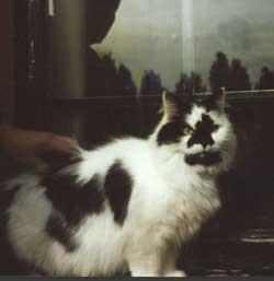 Photo of cat.