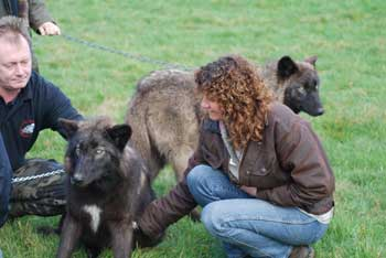 Su with Mia, a wolf at the UK Wolf Conservation Trust