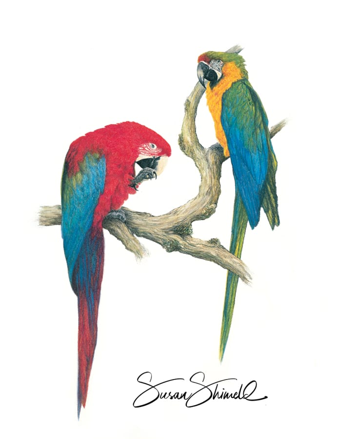 "<span class=""show_in_gallery"">Macaw Magic </span><span class=""show_in_popup""><a href="" https://www.natureinart.com/shop/original/macaw-magic-original-art/"" class=""pop-color1"">More info...</a></span>"