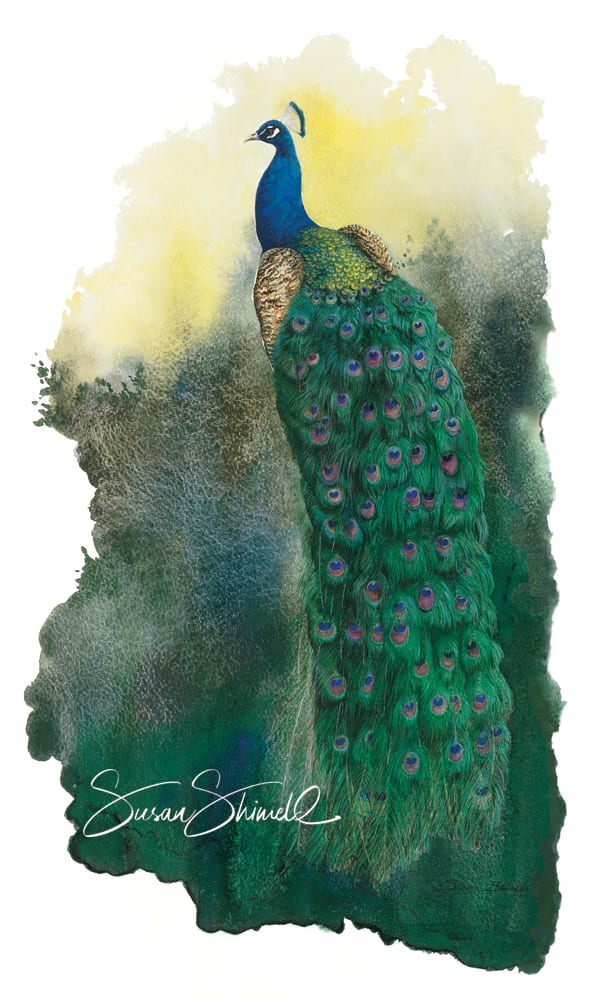"<span class=""show_in_gallery"">Peacock at Larmer Tree</span><span class=""show_in_popup""><a href="" https://www.natureinart.com/shop/original/peacock-at-larmer-tree-original-art/"" class=""pop-color1"">More info...</a></span>"