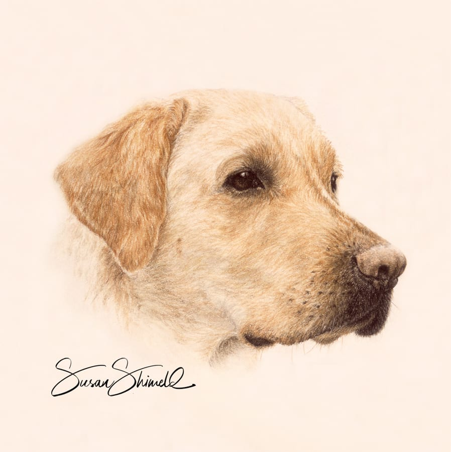 "<span class=""show_in_gallery"">Labrador Retriever</span><span class=""show_in_popup""><a href=""https://www.natureinart.com/shop/fine-art/labrador-retriever/"" class=""pop-color1"">More info...</a></span>"