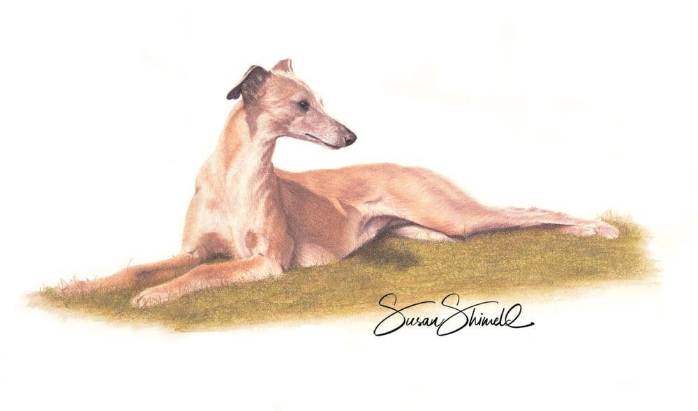 "<span class=""show_in_gallery"">Whippet</span><span class=""show_in_popup""><a href=""https://www.natureinart.com/shop/fine-art/whippet/"" class=""pop-color1"">More info...</a></span>"