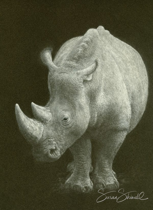 "<span class=""show_in_gallery"">Out of the Shadows</span><span class=""show_in_popup""><a href=""https://www.natureinart.com/shop/fine-art/out-of-the-shadows-white-rhino/"" class=""pop-color1"">More info...</a></span>"