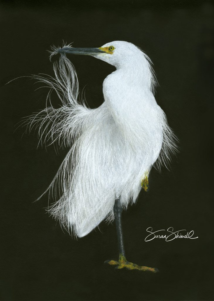 GORGEOUS GREAT EGRET FINE ART GREETING CARD