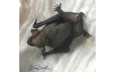 Bat No. 3.