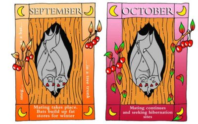 Bat Conservation Trust Calendar